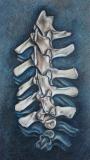 Spine | Coloured Pencil
